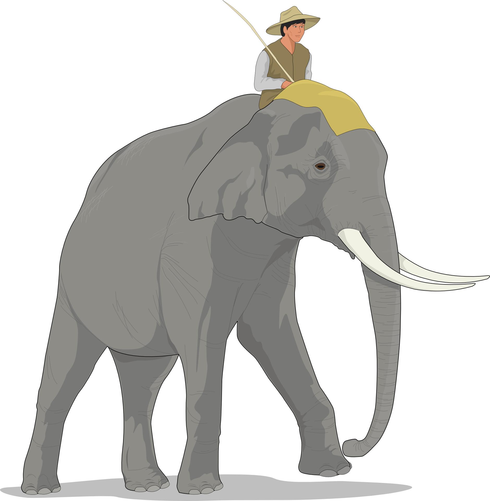 Brown elephant vector, rider