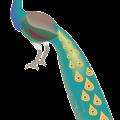Cartoon animal,bird,peacock vector
