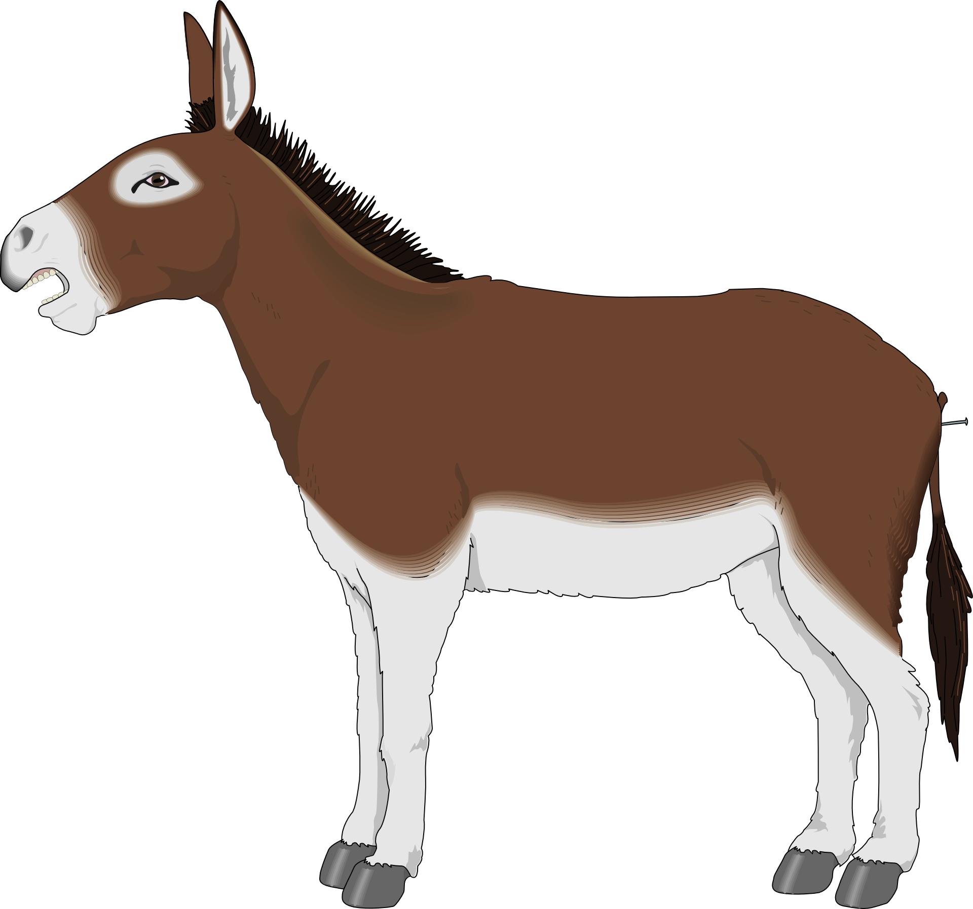 Cartoon animal,brown donkey vector