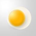 Yellow Creative Egg Free PSD