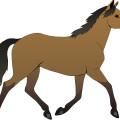 brown cartoon horse
