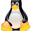 cartoon animal-cute penguin vector