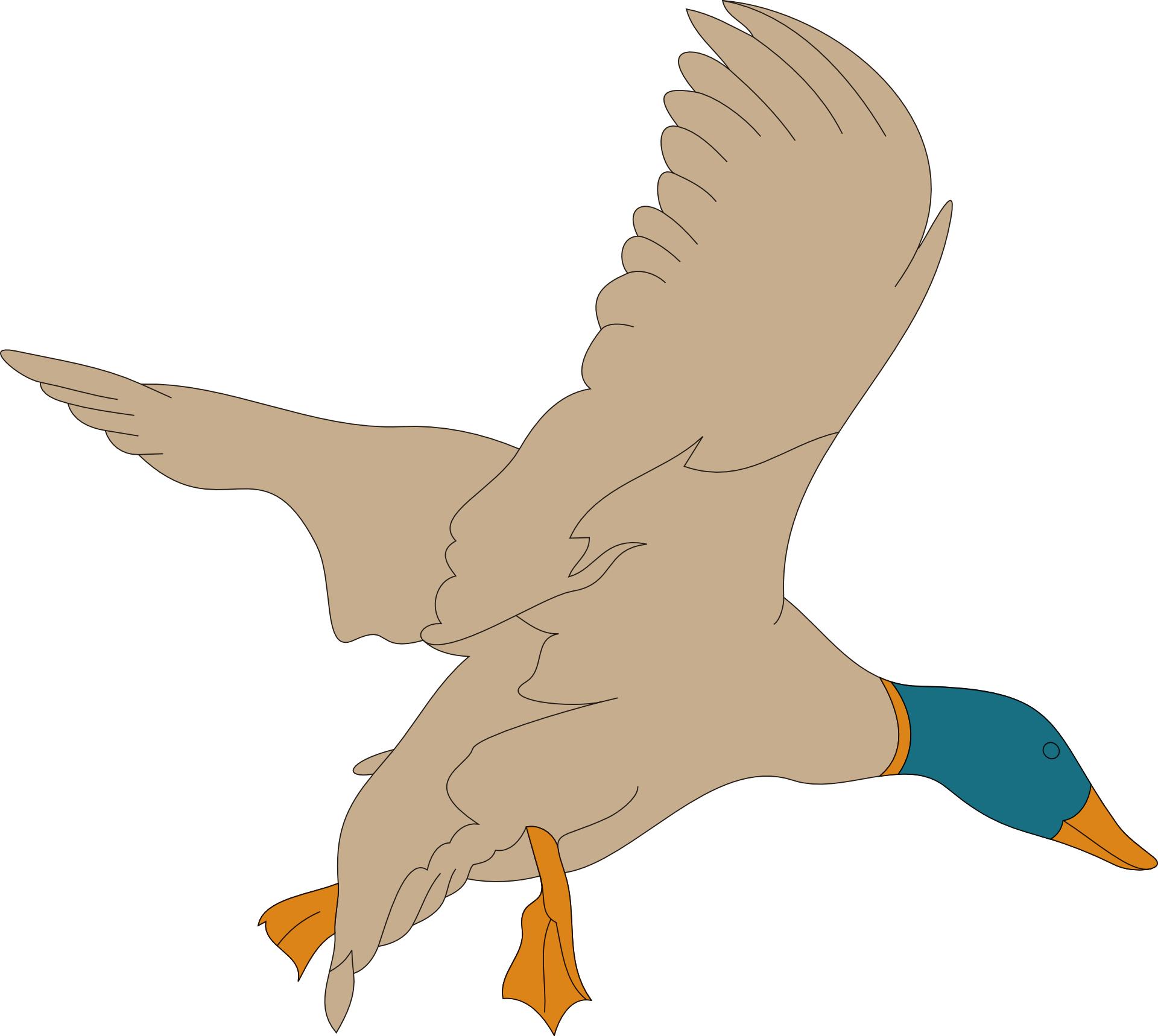 cartoon animal,brown bird,mallard vector