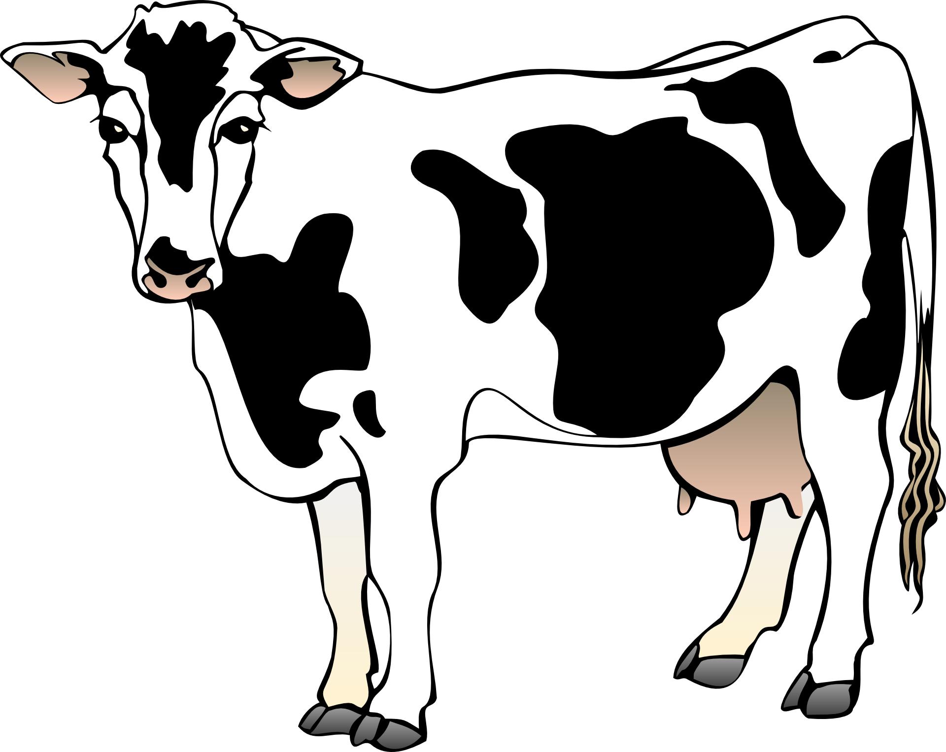 cow vector-cartoon animal