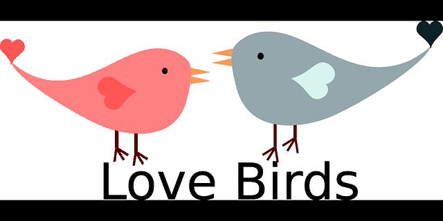 valentine love birds free vector