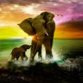 Animal Lovely Elephant PSD