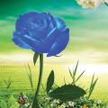 Freebie PSD-Blue Rose Garden