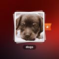 Funny Dog PSD Photoshop