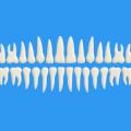 Free Teeth PSD (Vector Shapes)