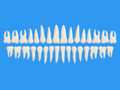 Free Teeth PSD (100% Vector Shapes)