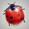 Ladybird Icon PSD